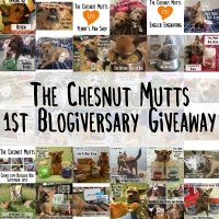 1st blogiversary giveaway
