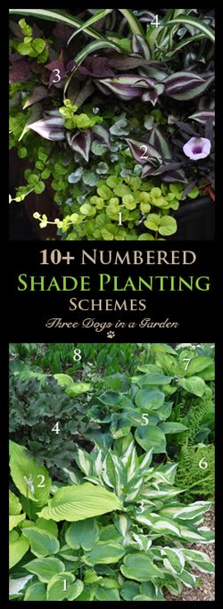 10+ Numbered and Identified Shade Planting Schemes