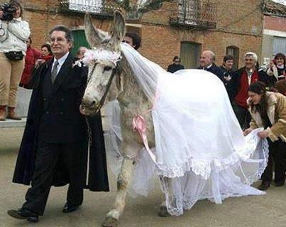 نتيجة بحث الصور عن أغرب حالة زواج في العالم