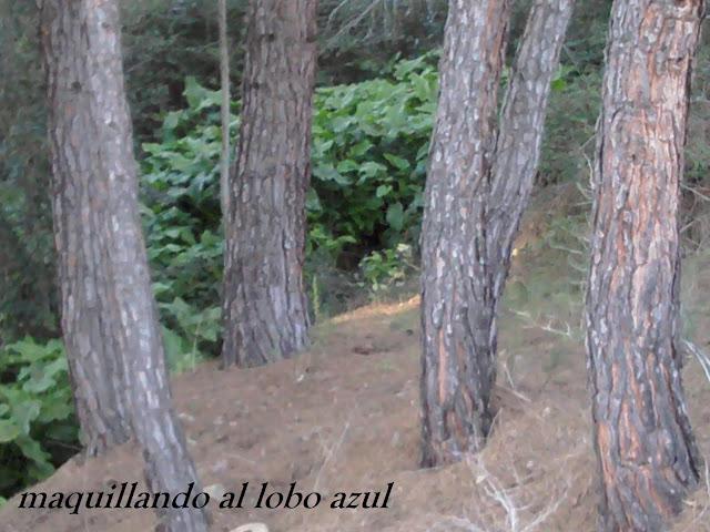 árboles y calas