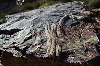 Visitar Peña García Ruta de los Fósiles, Fósil