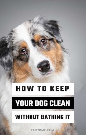 How To Keep Your Dog Clean Without Bathing it