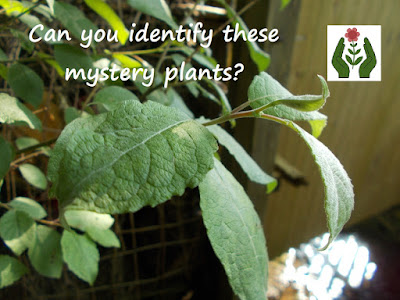 Can you identify these mystery plants? Green Fingered Blog