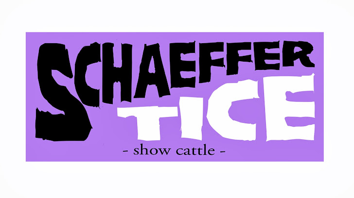 Schaeffer Show Cattle