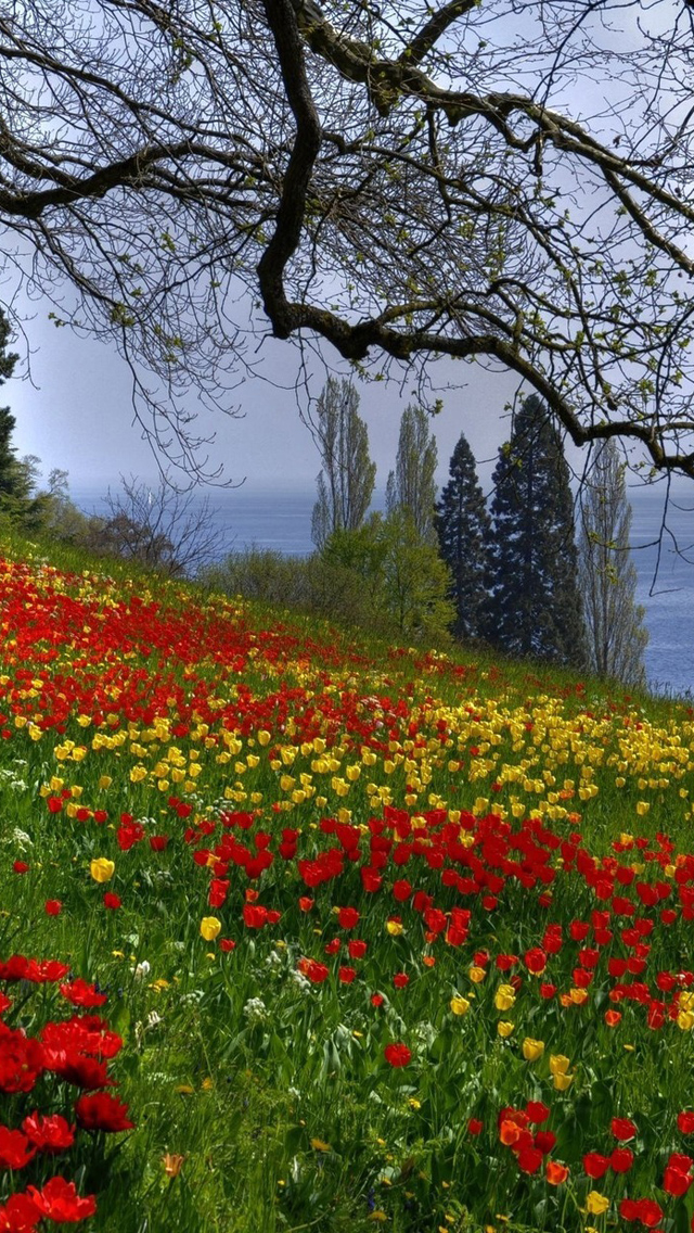 Free Download Spring Flower 2013 iPhone 5 HD Wallpapers ...