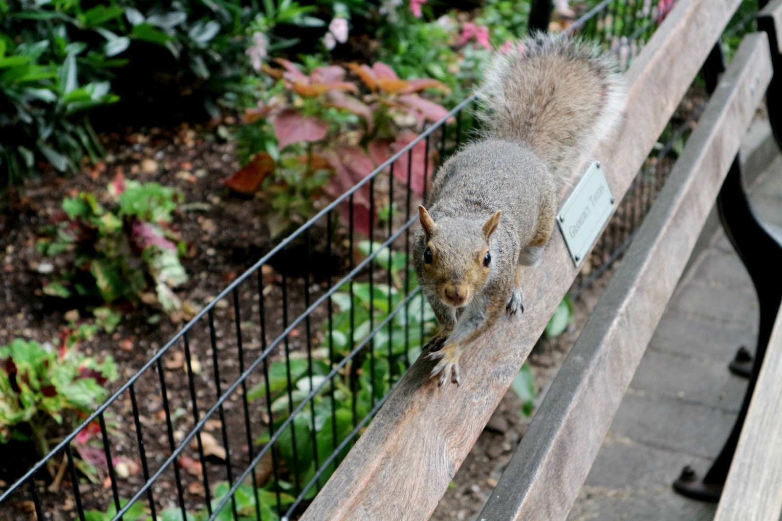 Madison Square Park squirrels