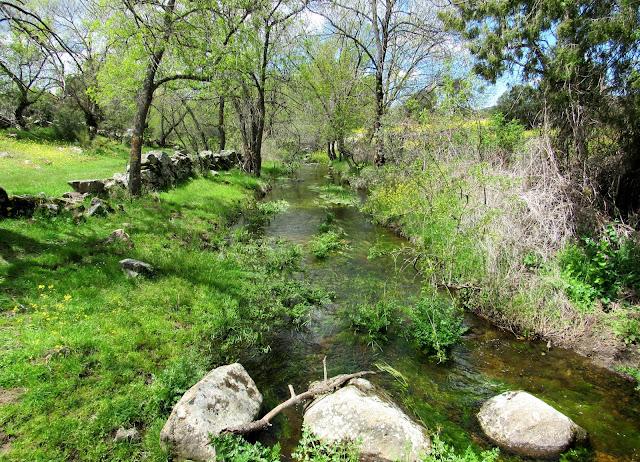 arroyo de la Moraleja, ríos de agua clara, senda de la Puente,