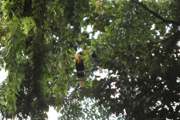 Wisata alam di Manokwari