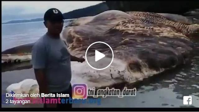 Masya Allah.. Ini Dia Video Cumi-Cumi Raksasa Seberat 35 Ton Yang Ditemukan TNI