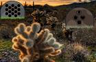 G2R Daydreaming Desert Forest Escape walkthrough