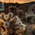 G2R Daydreaming Desert Forest Escape