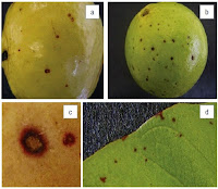 http://sciencythoughts.blogspot.co.uk/2014/10/the-cause-of-pink-spot-disease-on.html