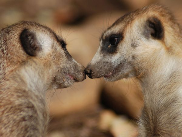 Animal pictures: 17 Adorable pictures of animals kissing ...