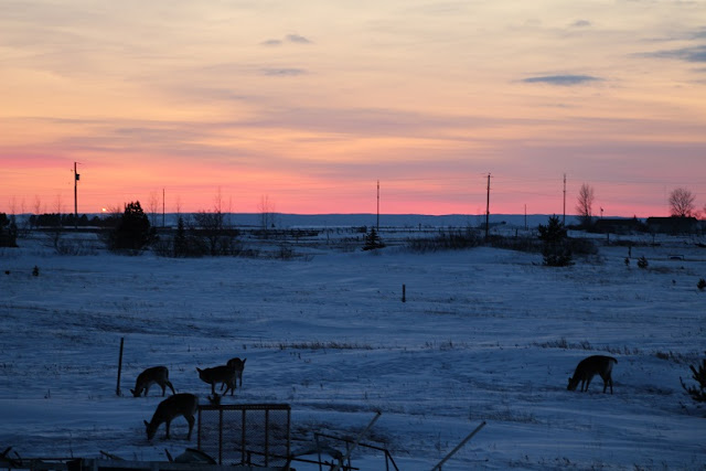 Deer under a pink sunset