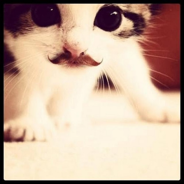 Hipster kitten with an adorable waxed mustache. Better with a mustache?
