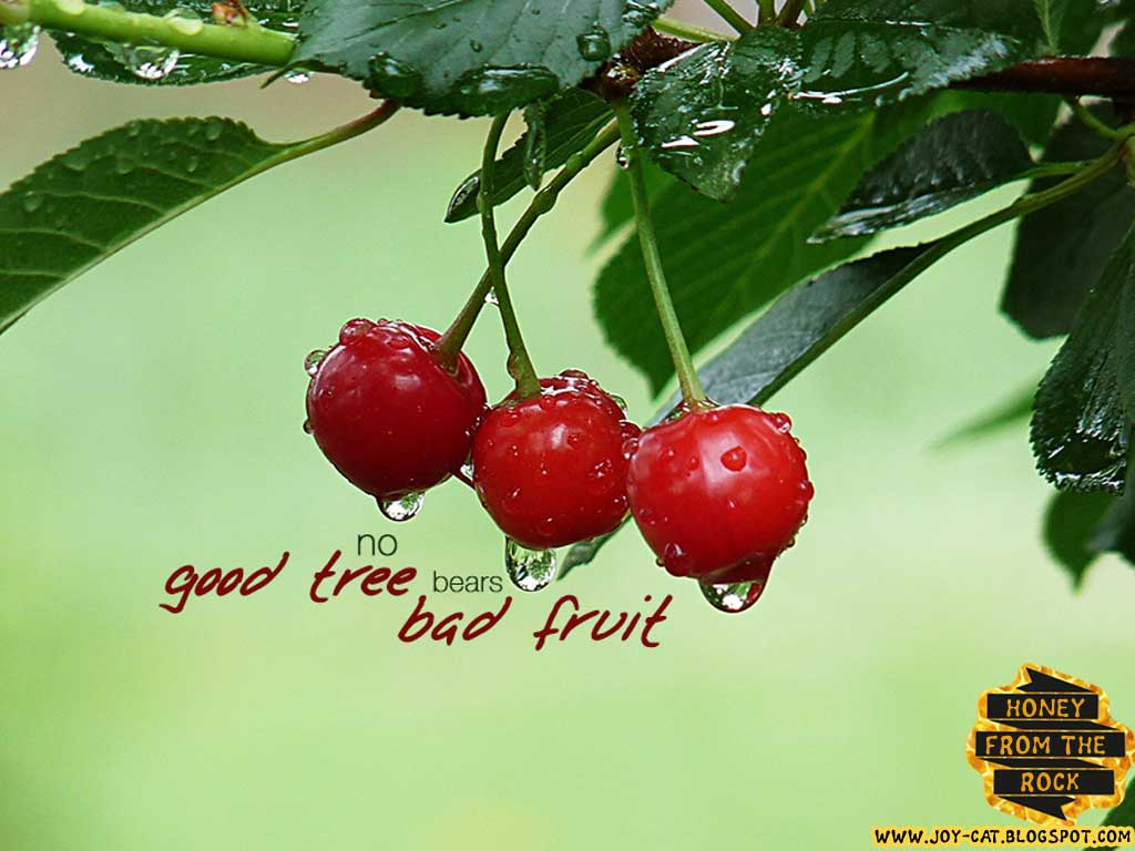 You Can Tell Tree Fruit It Bears