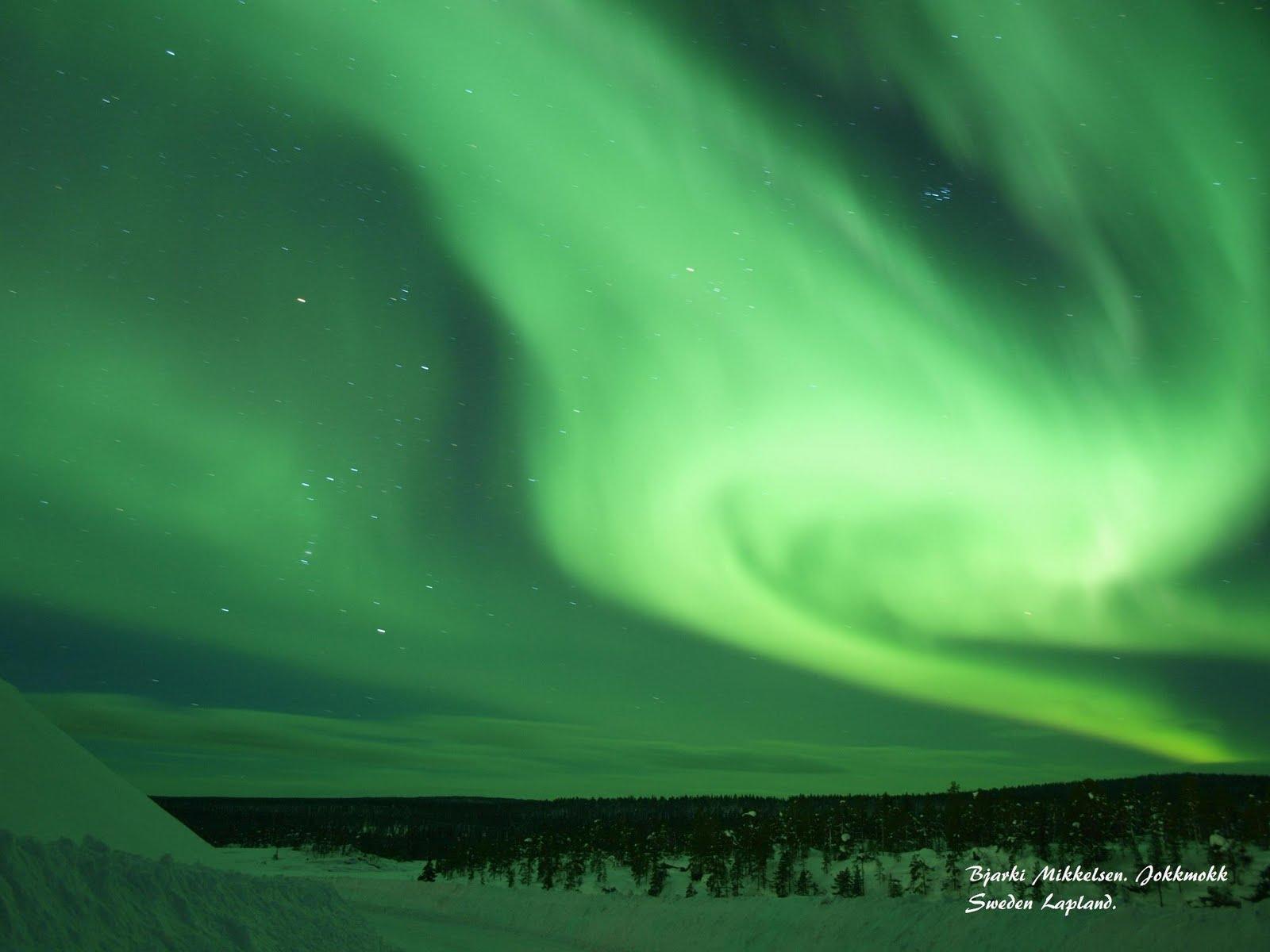 polar lights polly