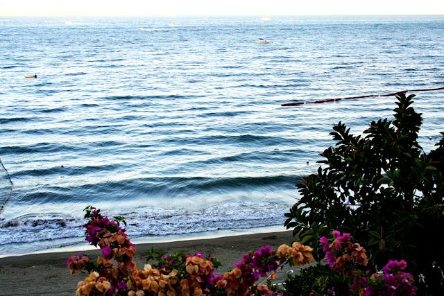 spiaggia, mare, sabbia, fiori, acqua, cielo