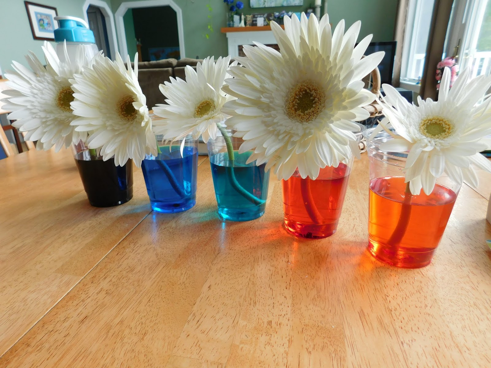 Our Unschooling Journey Through Life: 100 Days of Science #30: Color ...