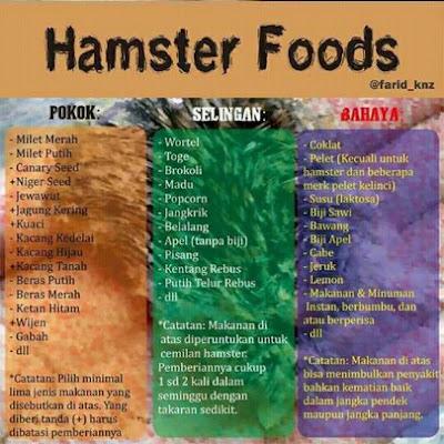 daftar makanan hamster yang baik