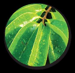 Pengobatan Herbal Limfoma ~ Pengobatan Stroke Ringan