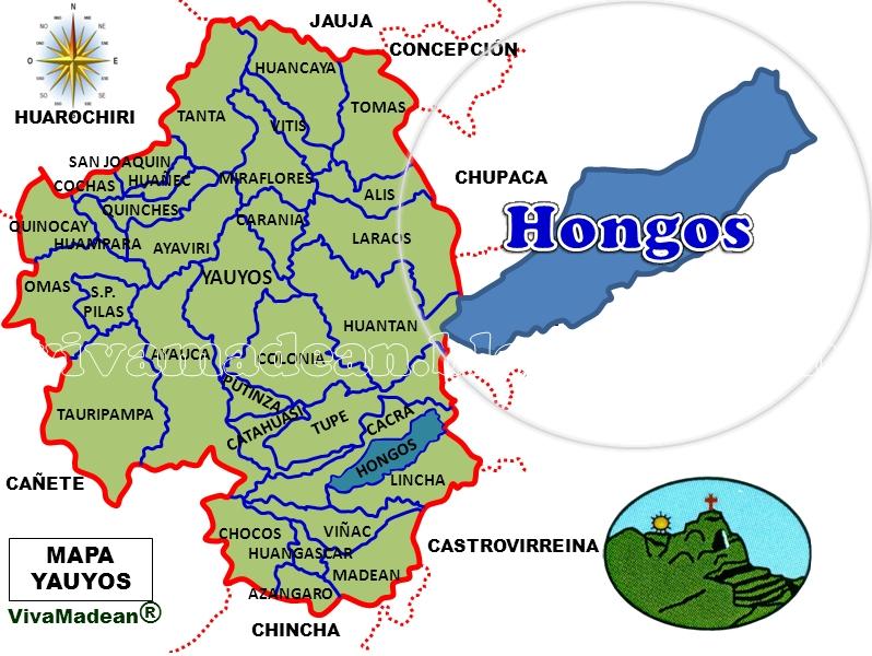 ubicacion de los hongos