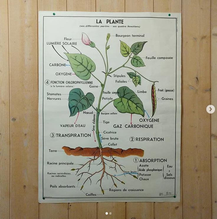 affiche d'école ancienne sur la plante