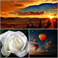 jardins belos de rosas brancas e amarelas