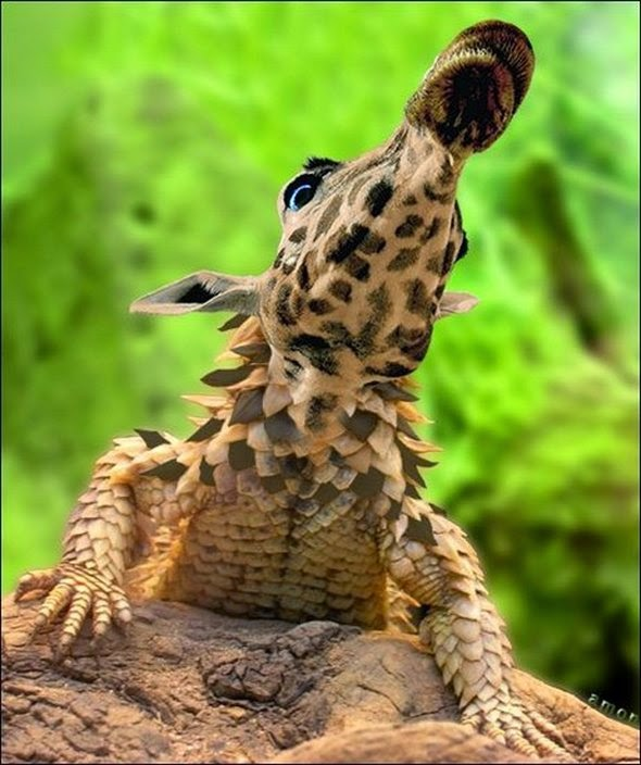 hewan hybrid | liataja.com