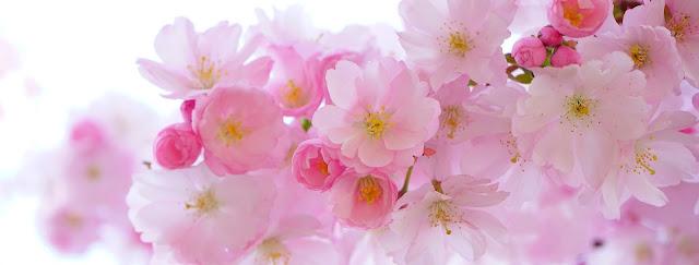 fleurs rose beau santé naturel cosmétique beauté