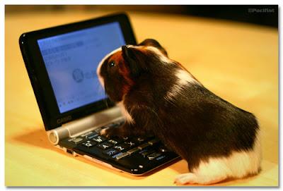 cobayo investigando en la computadora la información que desea leer