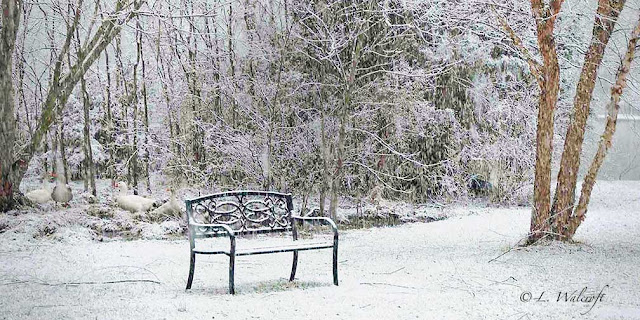 snow scene with bench