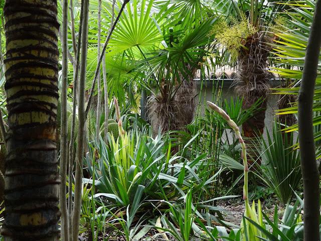 (07) Le jardin de Bésignoles - Privas - Page 2 DSC08092