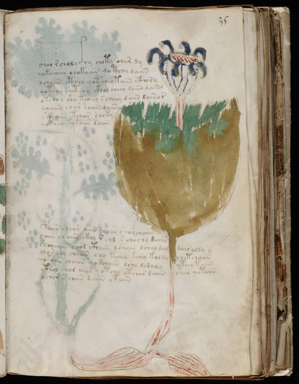 manuscrito067
