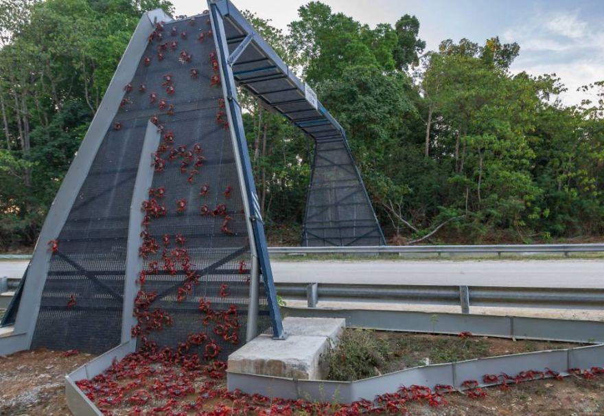Крабовый мост на острове Рождества
