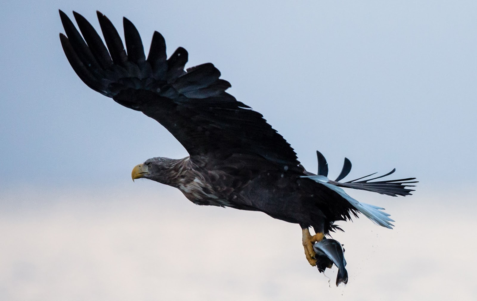 Perhaps you'll capture an eagle in flight aboard the whale and eagle sea safari.