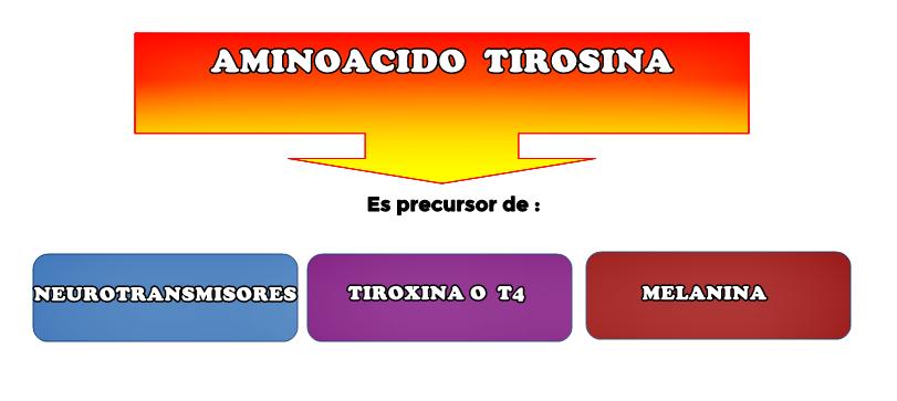 tirosina-precursora