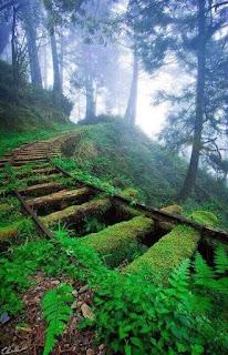 Taman Tema yang terbiar di Nara Dreamland, Jepun