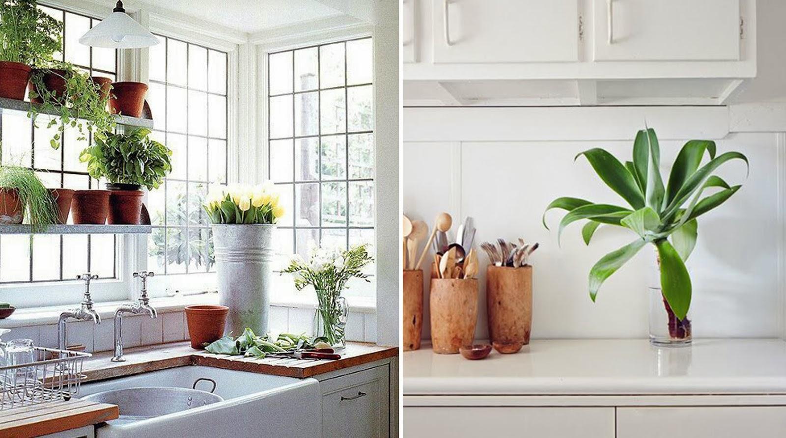 cocinar con plantas_ameiseblog