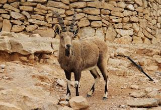 Désert du Negev et Mitzpe Ramon