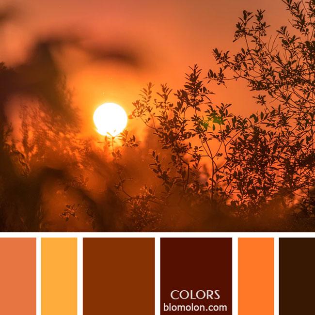 variedad_en_color_paletas_de_colores_34