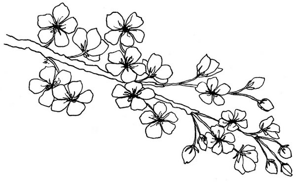 Line Drawing Flowers Blossom : Beccy s place blossom branch