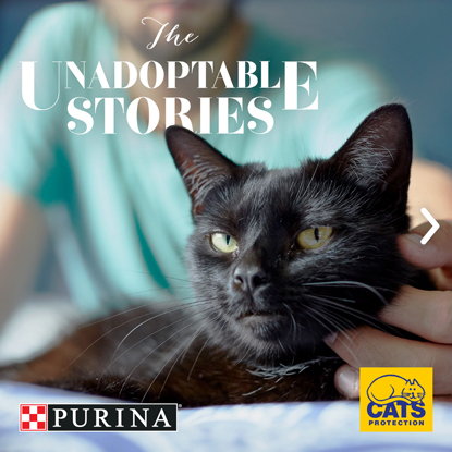 black cat Purina and Cats Protection