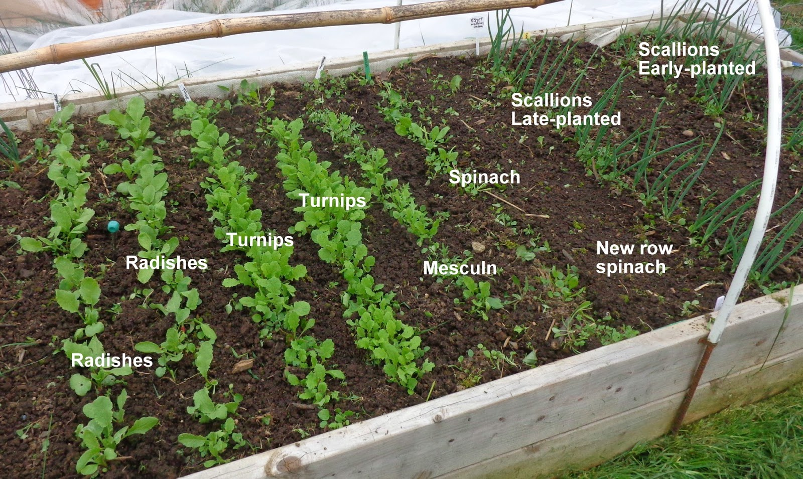 Growing Greener In The Pacific Northwest Kitchen Garden Raised Beds Low Tunnel 3 16 14