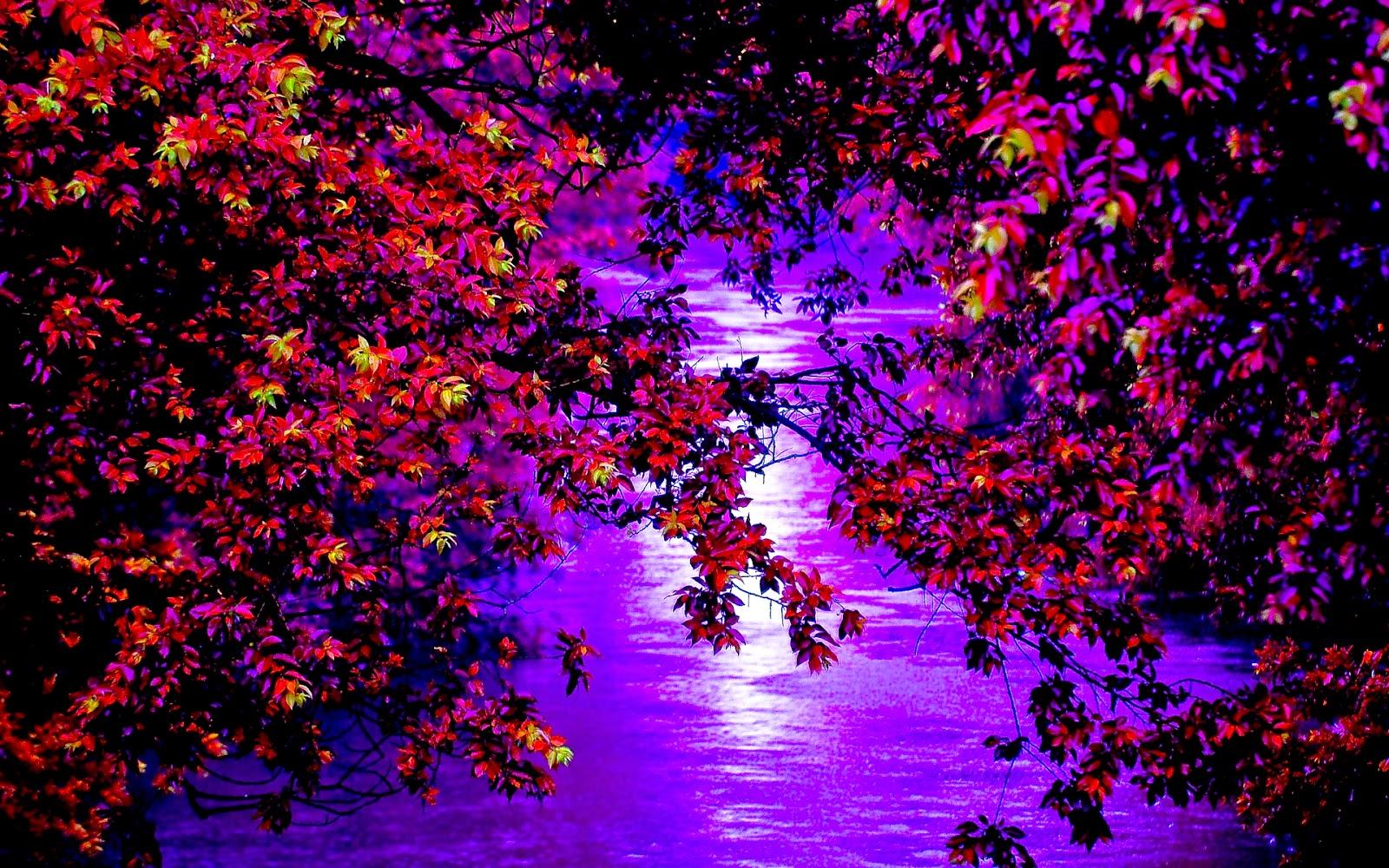Bomen en water
