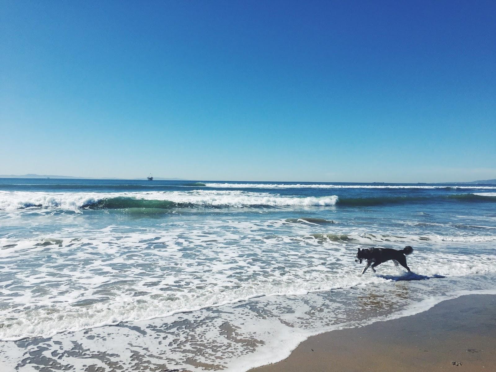 Huntington Dog Beach Parking