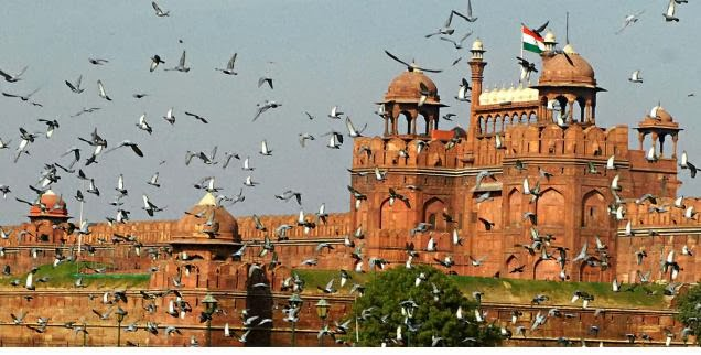 birds in delhi