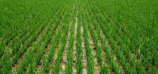 Agric, manufacturing sectors to enjoy single digit interest – CBN 3