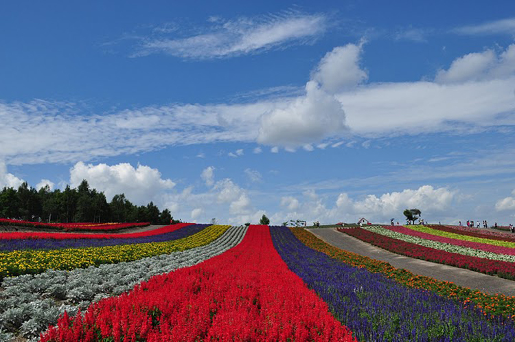 Baby Plus Buggy Flower Field Biei Hokkaido Most Beautiful Places In