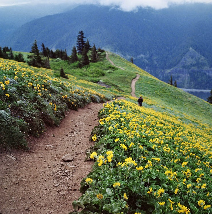 14. Dog Mountain, Washington, USA - 29 Wonderful Paths